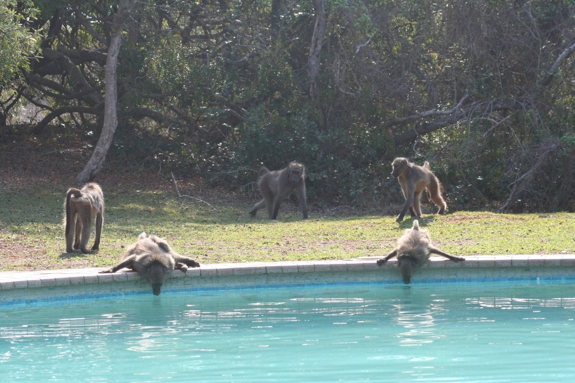Nieuws uit Afrika - Waterupdate Kaapstad, Zuid-Afrika