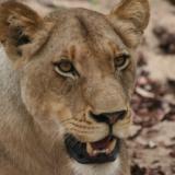 Een 21 daagse rondreis door Zuid-Afrika? Dit is de route langs de hoogtepunten!