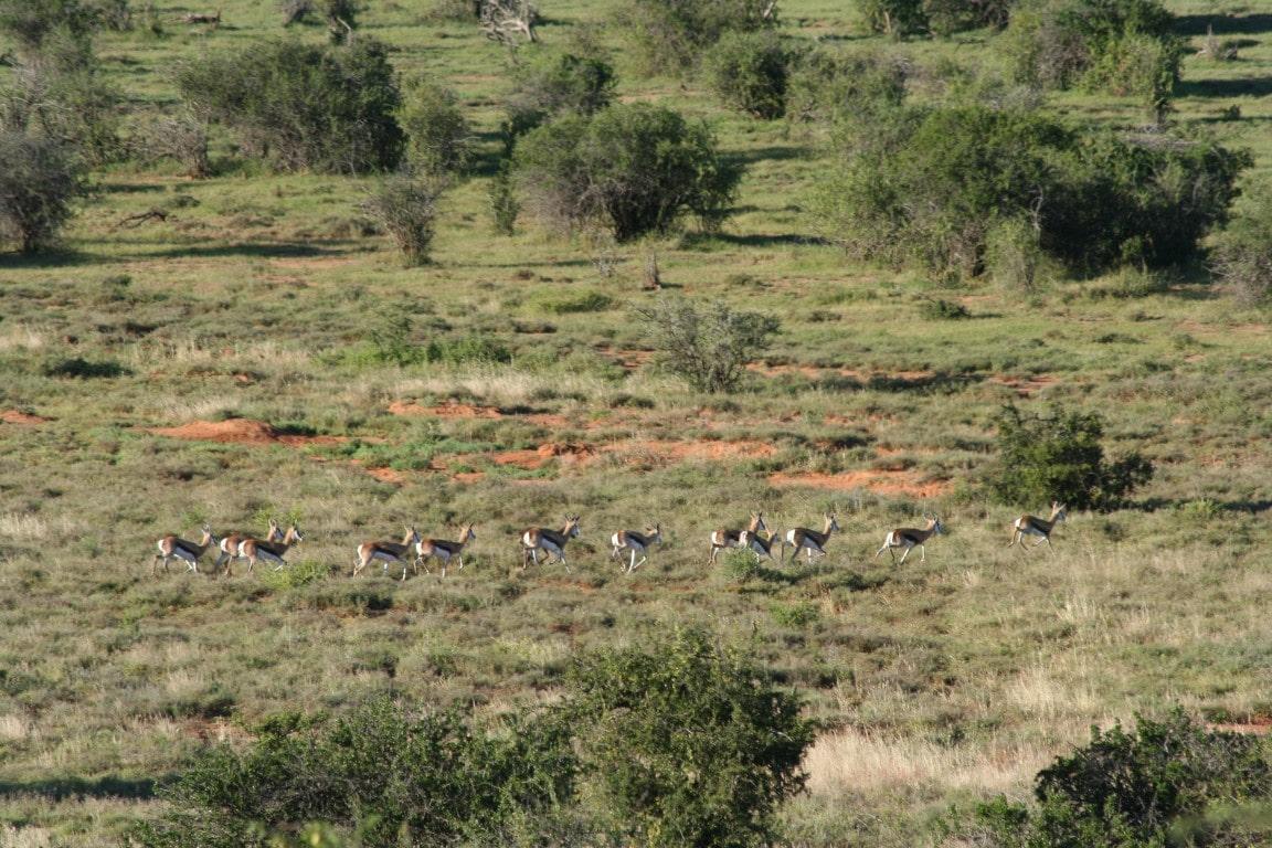 Nieuws uit Afrika - Samara Private Game Reserve, Zuid-Afrika