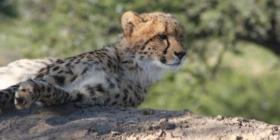 Nieuwsbrief 73 - Samara Private Game Reserve, Zuid-Afrika