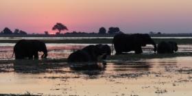 Henk & Ria - Olifanten bij zonsondergang Chobe NP