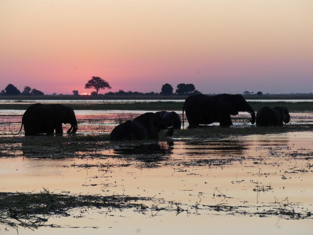 Nieuws uit afrika - olifanten en een ondergaande zon in Chobe NP