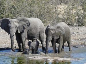 Henk & Ria - Olifanten in water Etosha