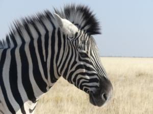 Henk & Ria - Zebra Etosha