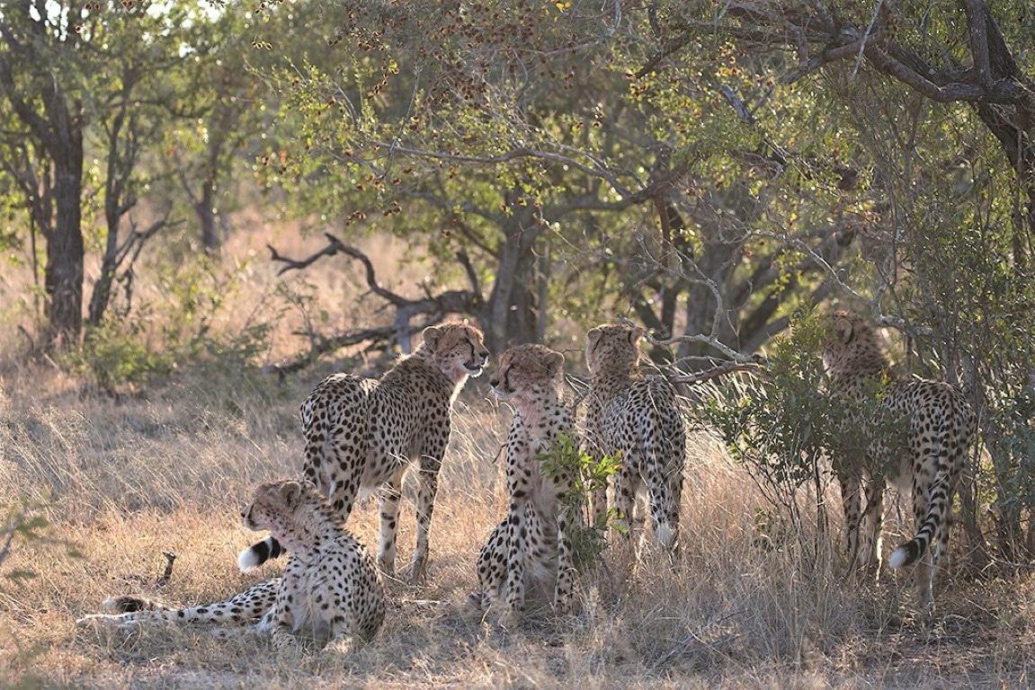 Out in Africa - Nieuws uit Afrika - Foto Andius Teijgelaar