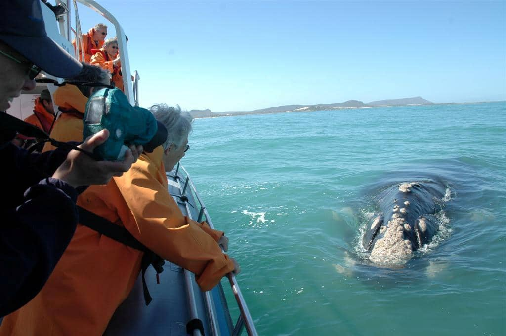 Hermanus, whale-watching, close encounter boat tour