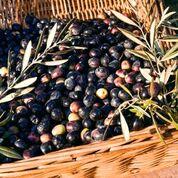 Galenia Estate - olijven in mand
