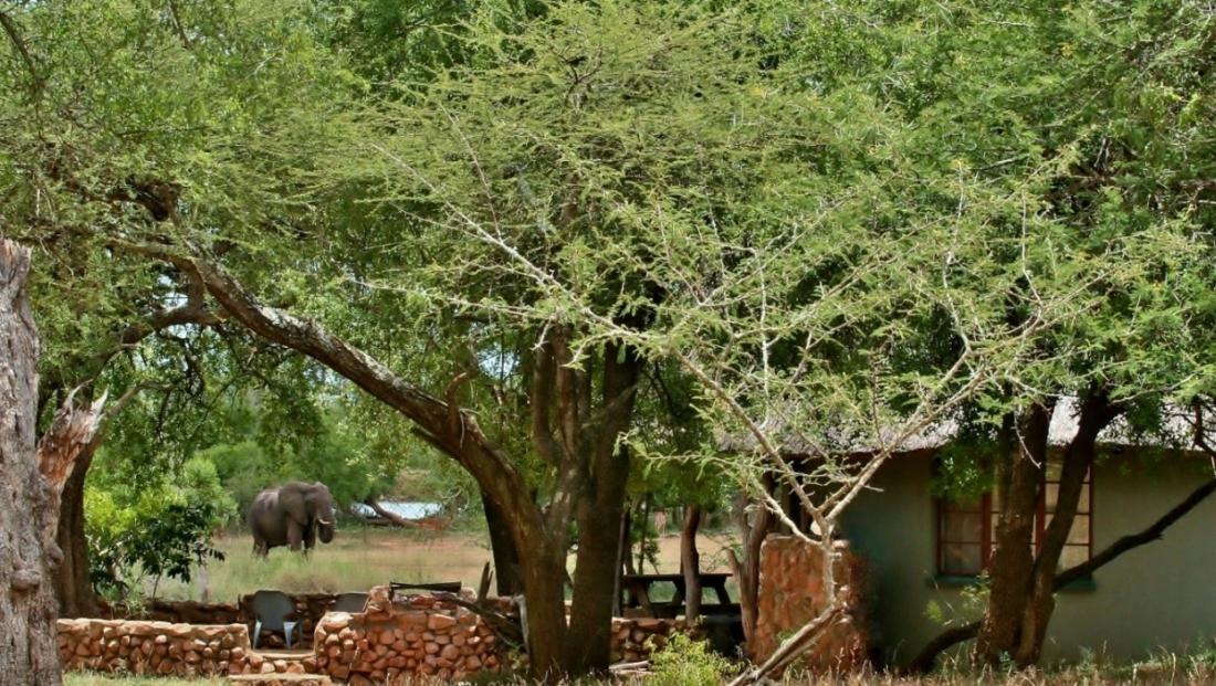 Hlane Royal NP - olifant bij huisje