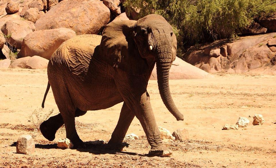 Madisa Camp - olifant
