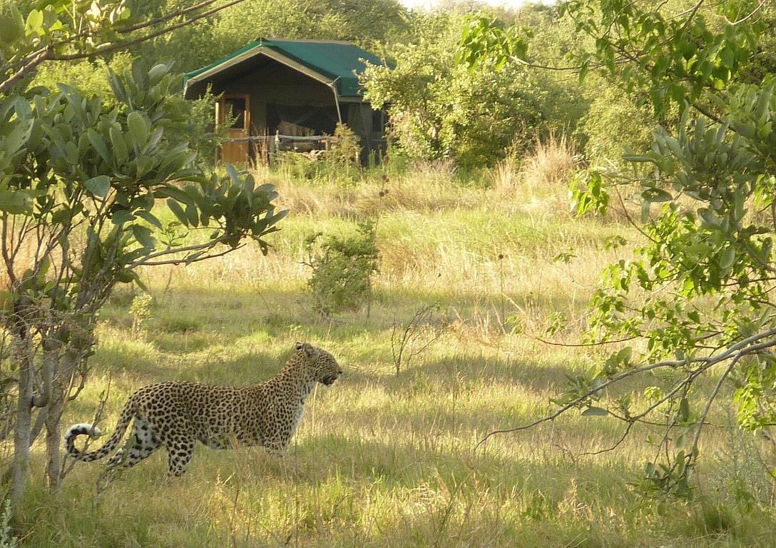 Luxe reizen Botswana: Gezien de uitstekende safari's is het geen wonder dat deze lodges vaak lang van tevoren vol zijn.