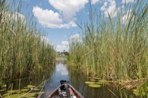 Olmo van Herwaarden - Mokorotocht Okavango Delta