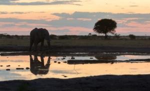 Olmo van Herwaarden - Olifant drinkt bij zonsondergang