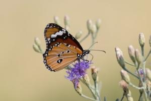 Olmo van Herwaarden - Vlinder op bloem