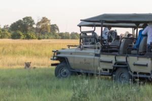 Olmo van Herwaarden - Leeuw bij game drive voertuig