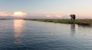 Olmo van Herwaarden - Olifant Chobe rivier oever