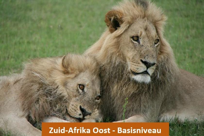 Voorbeelreis Zuid-Afrika Oost - Out in Africa