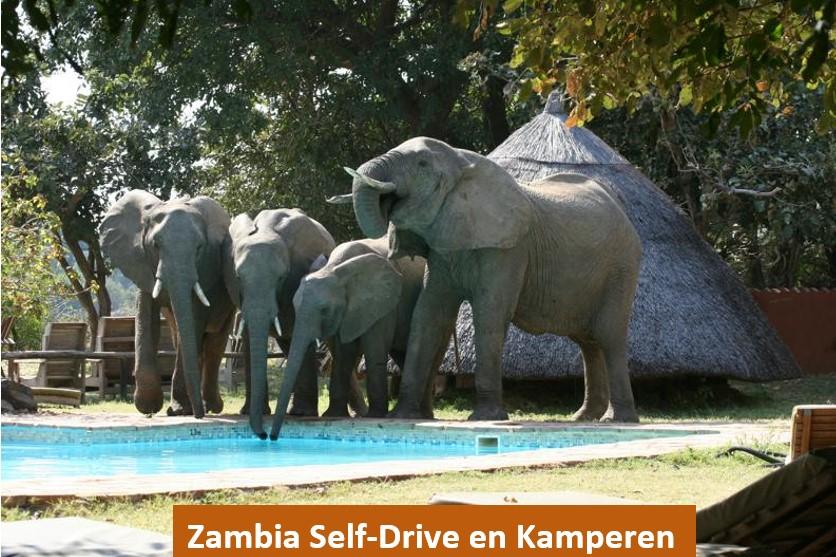 Voorbeelreis Zambia kamperen - Out in Africa