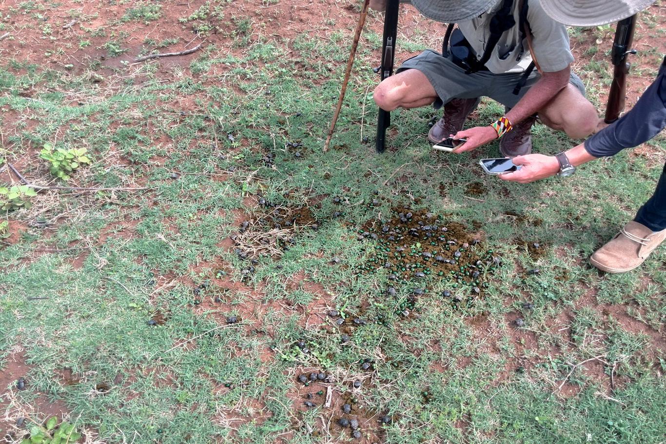 Rangercursussen: je leert over van alles, de grote en de kleine dingen in de bush!