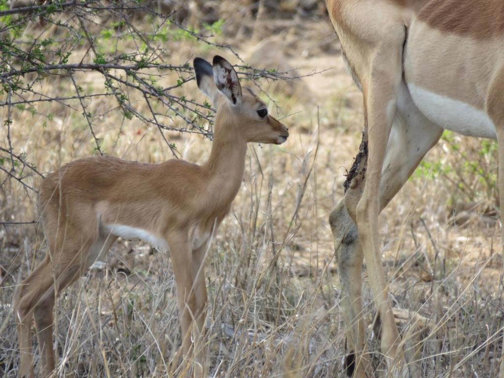 Nieuwsbrief Out in Africa - impala baby, regenseizoen is begonnen