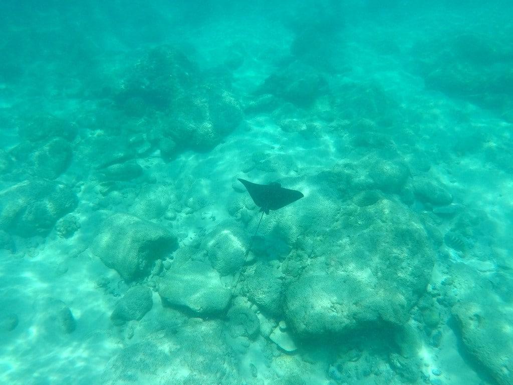 Out in Africa - rog, snorkelen, zee, Mahe, Seychellen, Afrika