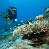 Rondreizen Seychellen - Duiken in de zee