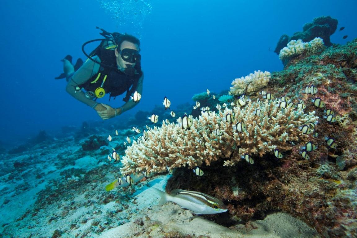 Rondreizen Seychellen - Dieper het water in tijdens een duiktrip