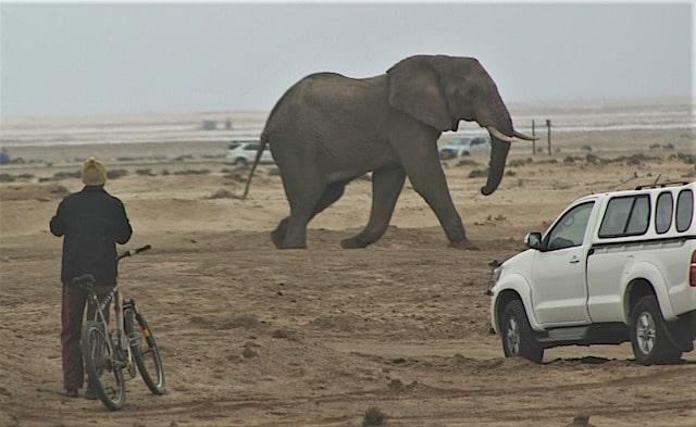 Nieuwsbrief Out in Africa - Dieren in het wild - olifant op het strand van Swakopmund (foto: The Namibian)