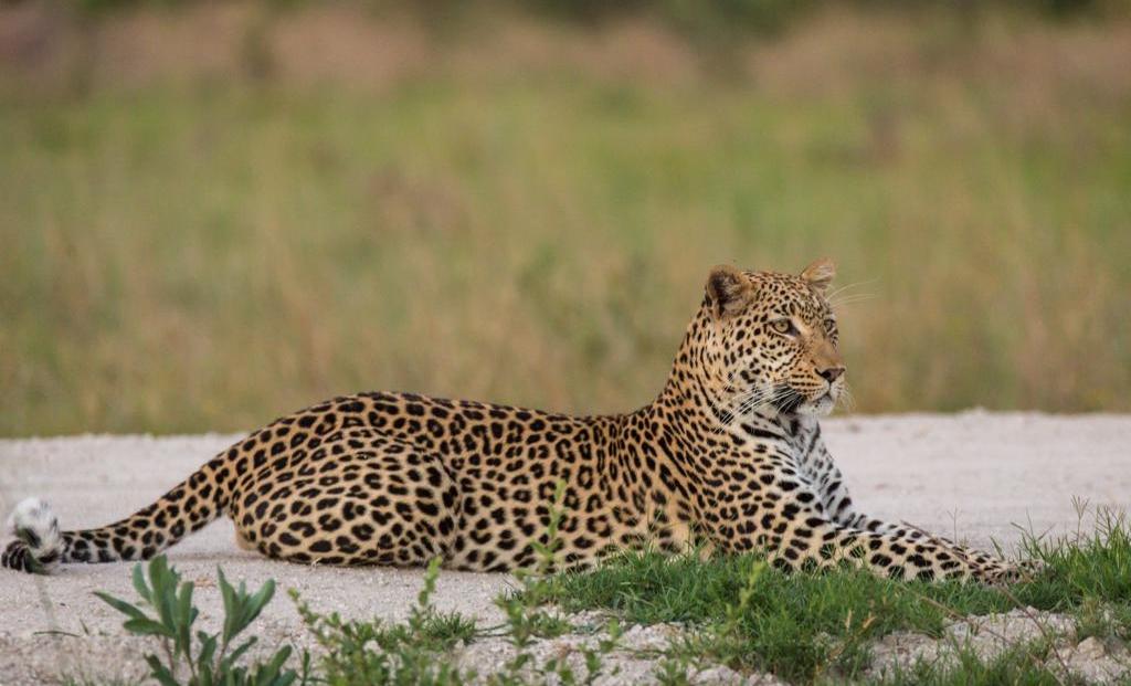 Mochaba Crossing - Luipaard