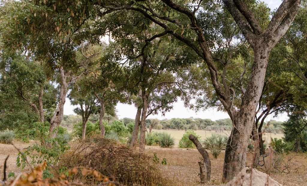 Mochaba Crossing - Uitzicht op vlaktes Okavango Delta