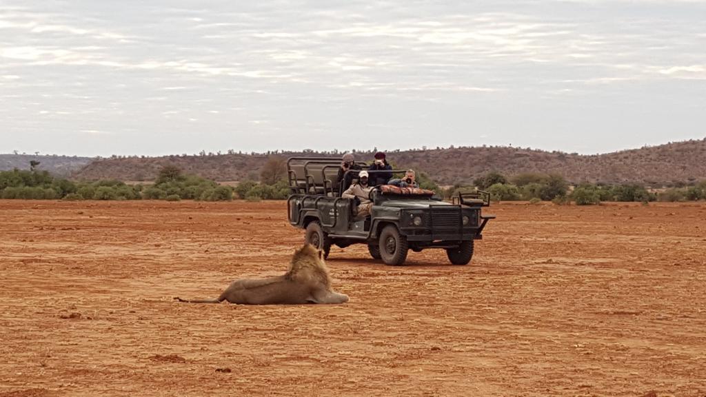 Molema Bush Camp - Wildrit met leeuw