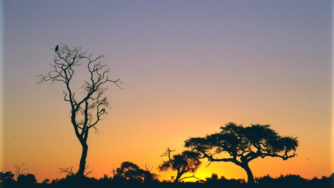 Moremi Game Reserve - Zonsondergang in de bush