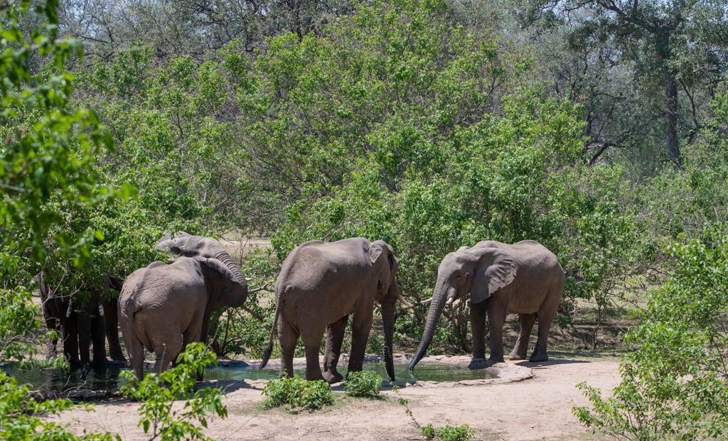 Serolo Safari Camp - Olifanten bij drinkplaats