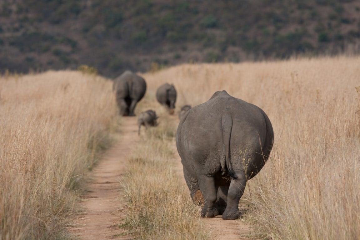 Rondreizen Zuid-Afrika + Botswana - Neushoorns in Welgevonden Game Reserve