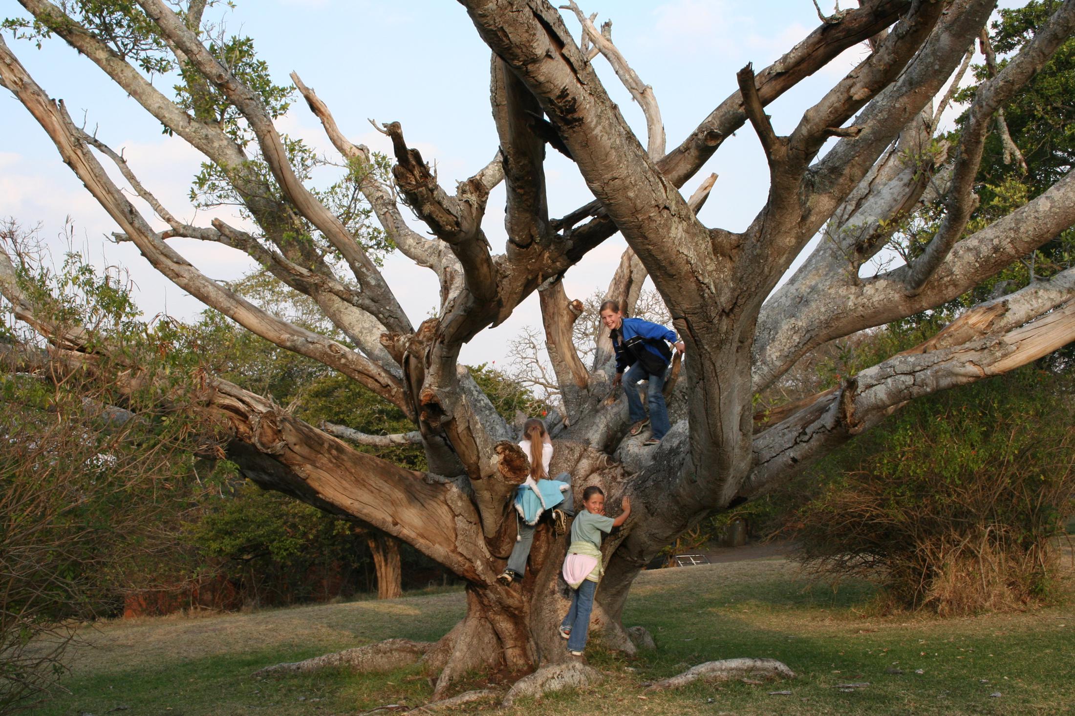 Familiereizen Zuid-Afrika: Locaties waar kinderen kunnen spelen zijn belangrijk.
