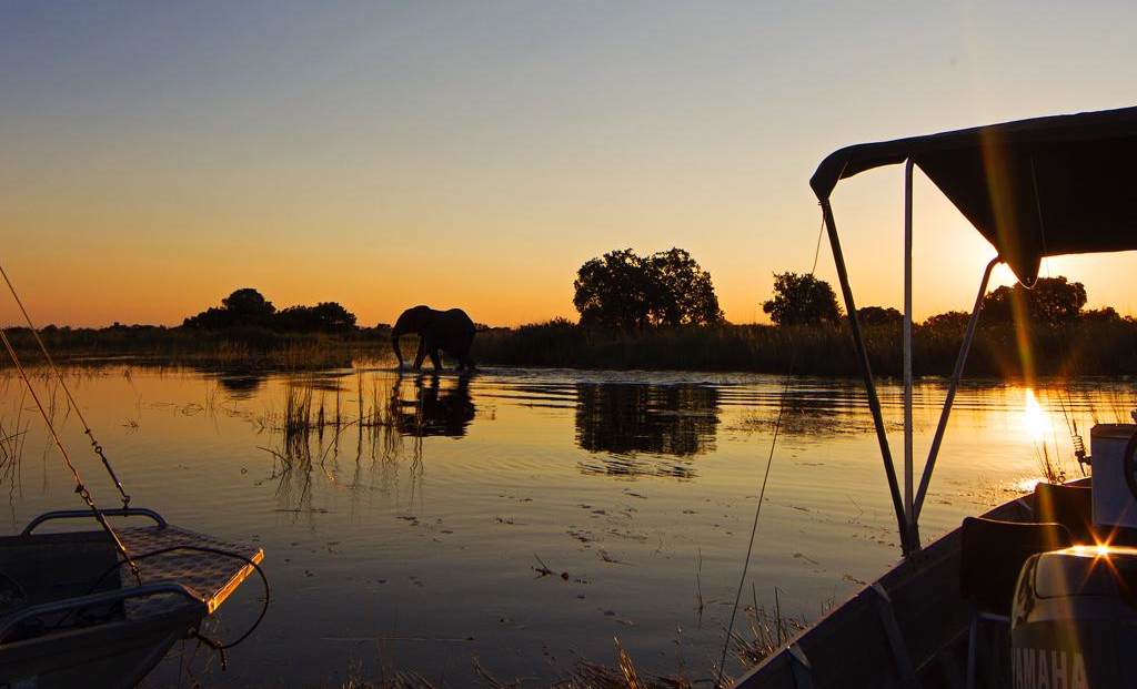 Camp Okavango - Boottocht bij zonsondergang, olifant in het water