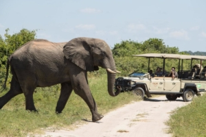 Chobe Game Lodge - Game drive met olifant
