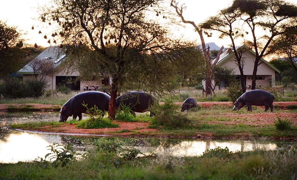 Erindi Camp Elephant - Nijlpaarden in het kamp