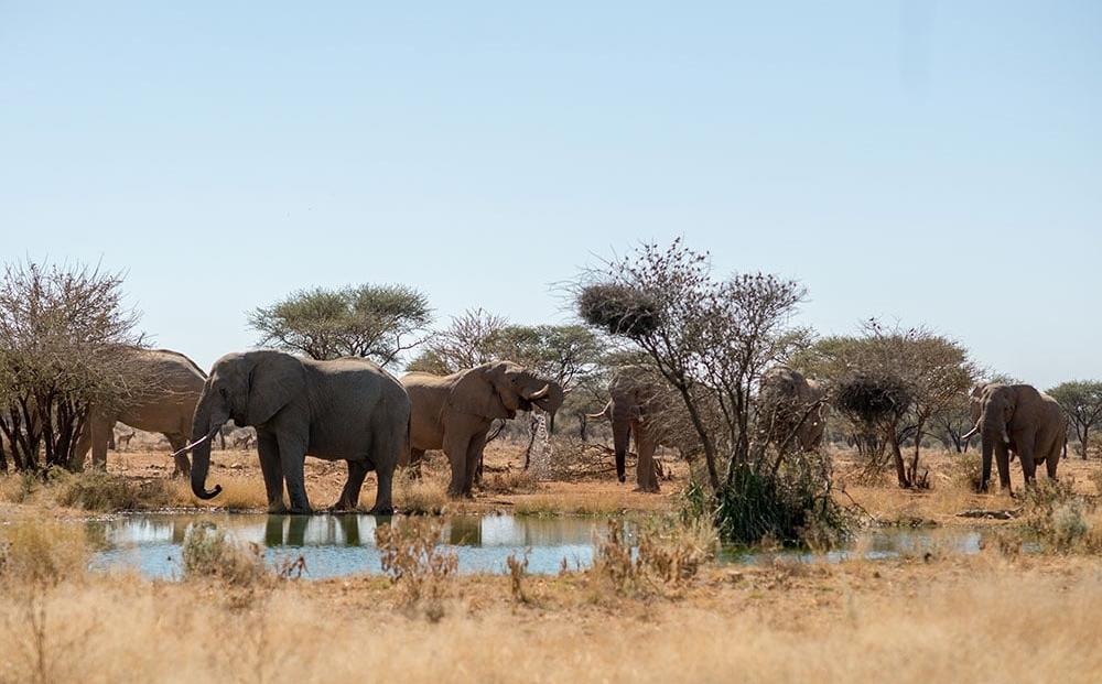 Erindi Game Reserve - Olifanten bij drinkplaats