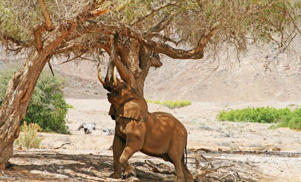 Khowarib Lodge - olifant