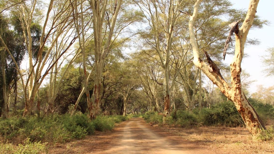 Kruger National Park - onverharde weg