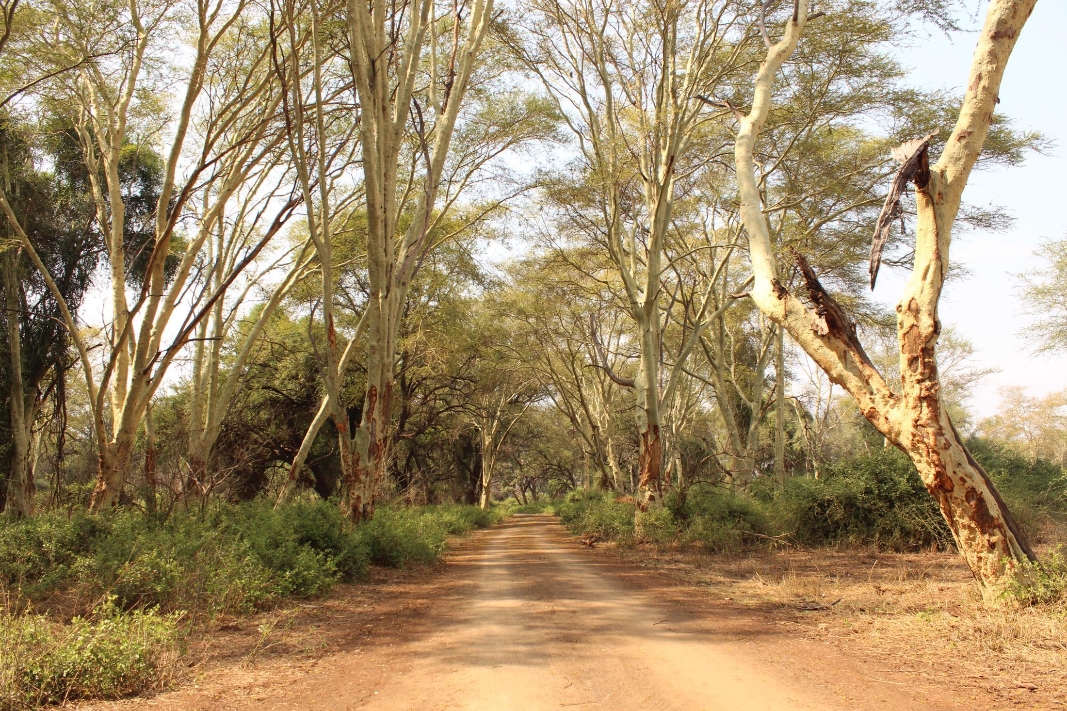 Huwelijksreizen Zuid-Afrika: Pafuri in het noorden van Krugerpark is nog ongerept.