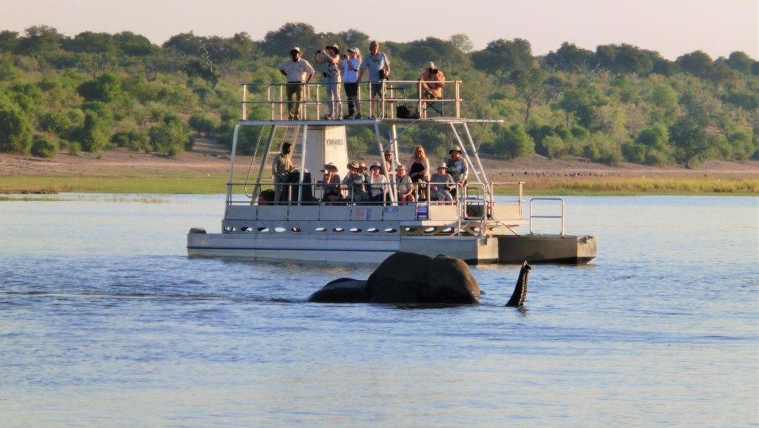 Chobe National Park - Olifant zwemt voor boot langs