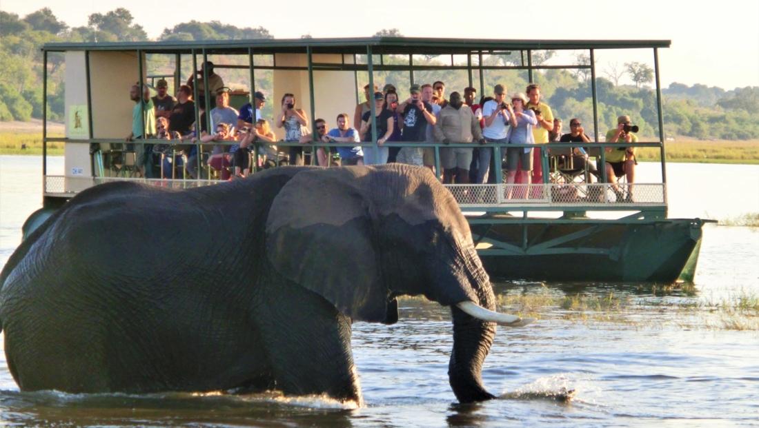 Chobe National Park - Olifant in het water voor boot