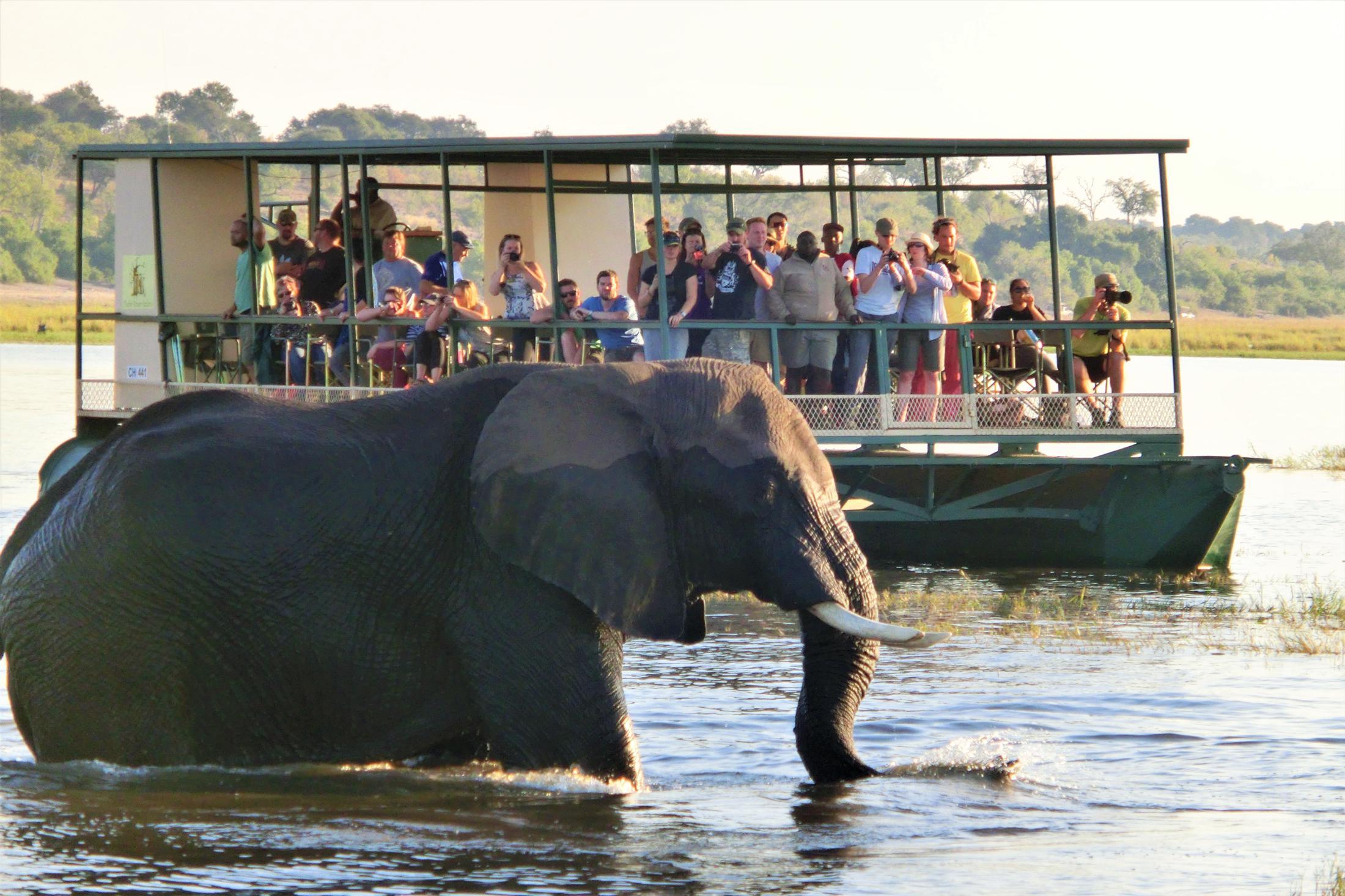 Safari & Natuur reizen Afrika - Foto safari in Chobe National Park, olifant steekt de rivier over