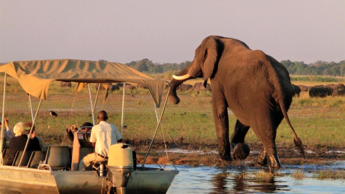 Chobe National Park - Olifant op de oever met bootje in het water