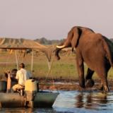 Rondreizen Botswana - Chobe National Park olifant op de oever met bootje in het water