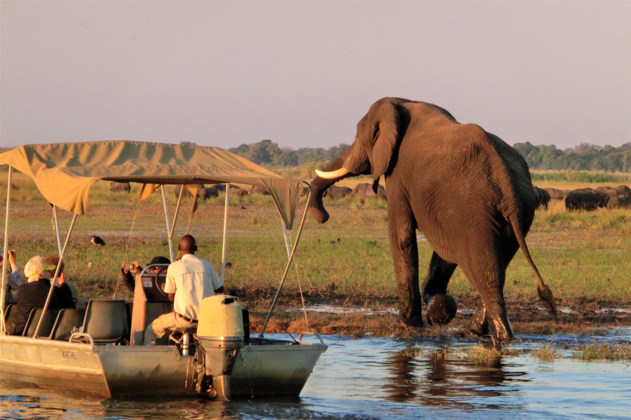 Rondreizen Zuid-Afrika + Botswana - Boottocht Chobe Rivier, olifant op de oever