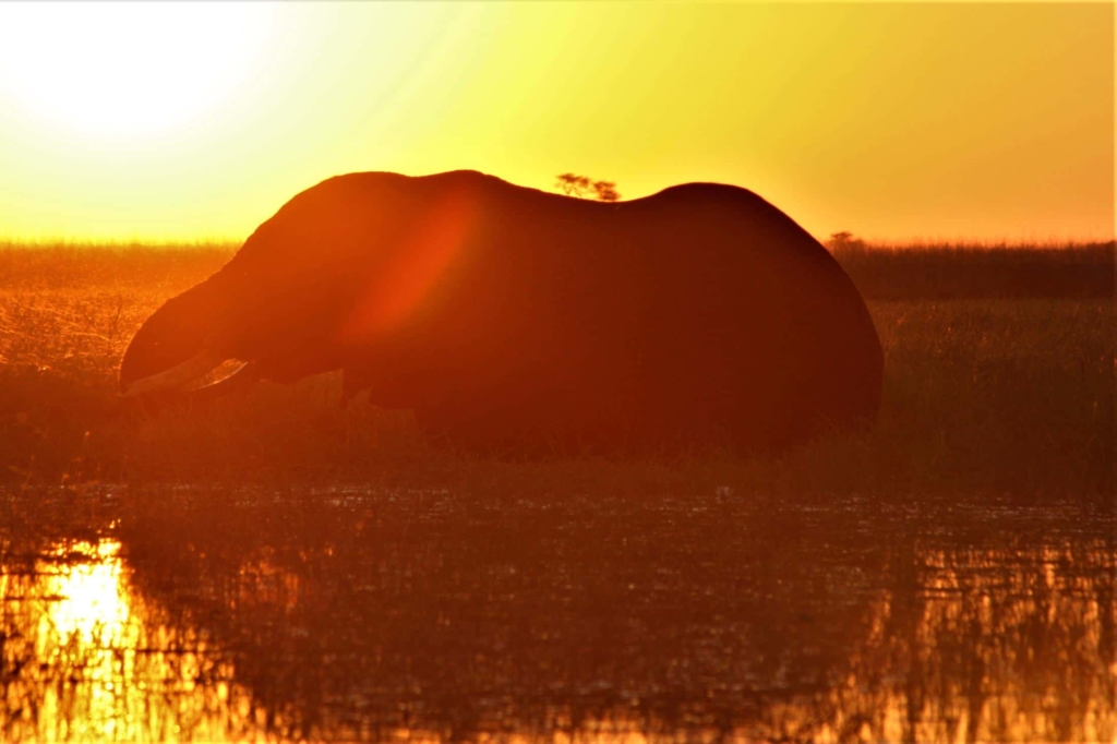 Leukste activiteiten Botswana - Chobe National Park - Olifant sihouet bij zonsondergang