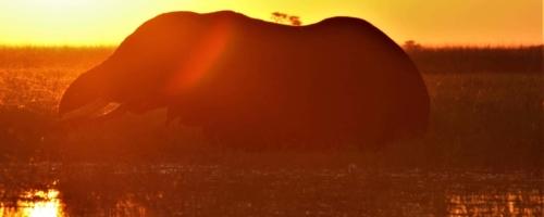 Chobe National Park - Olifant sihouet bij zonsondergang