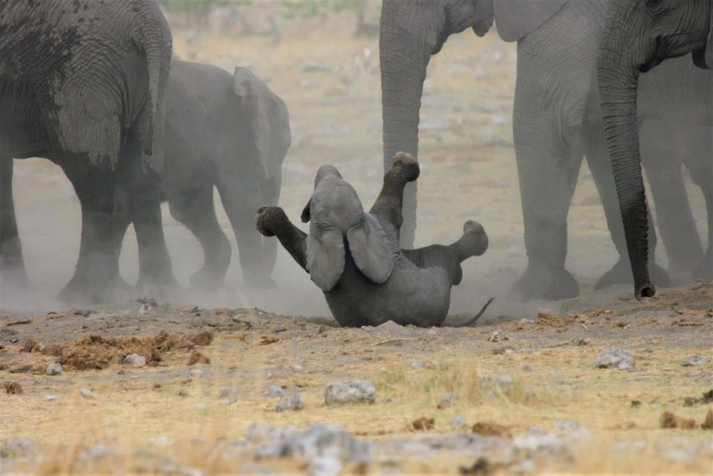Etosha National Park - Baby olifant speelt in het zand